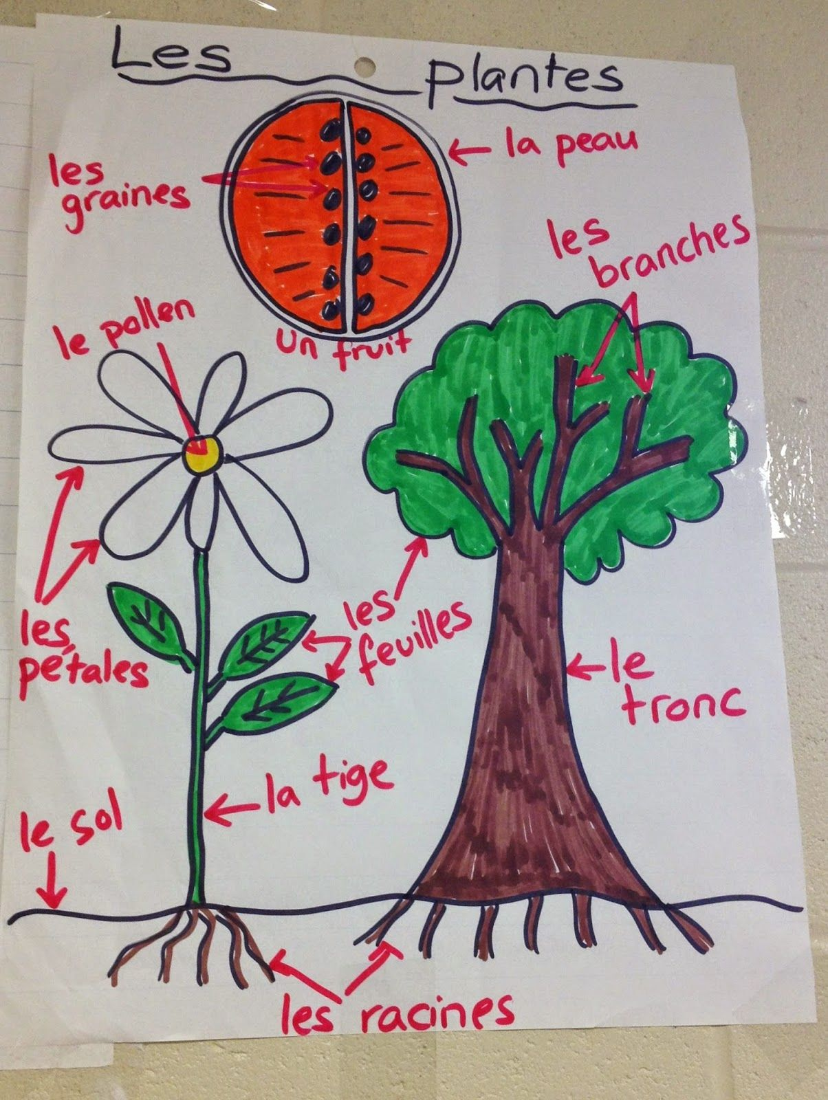 French Anchor Chart