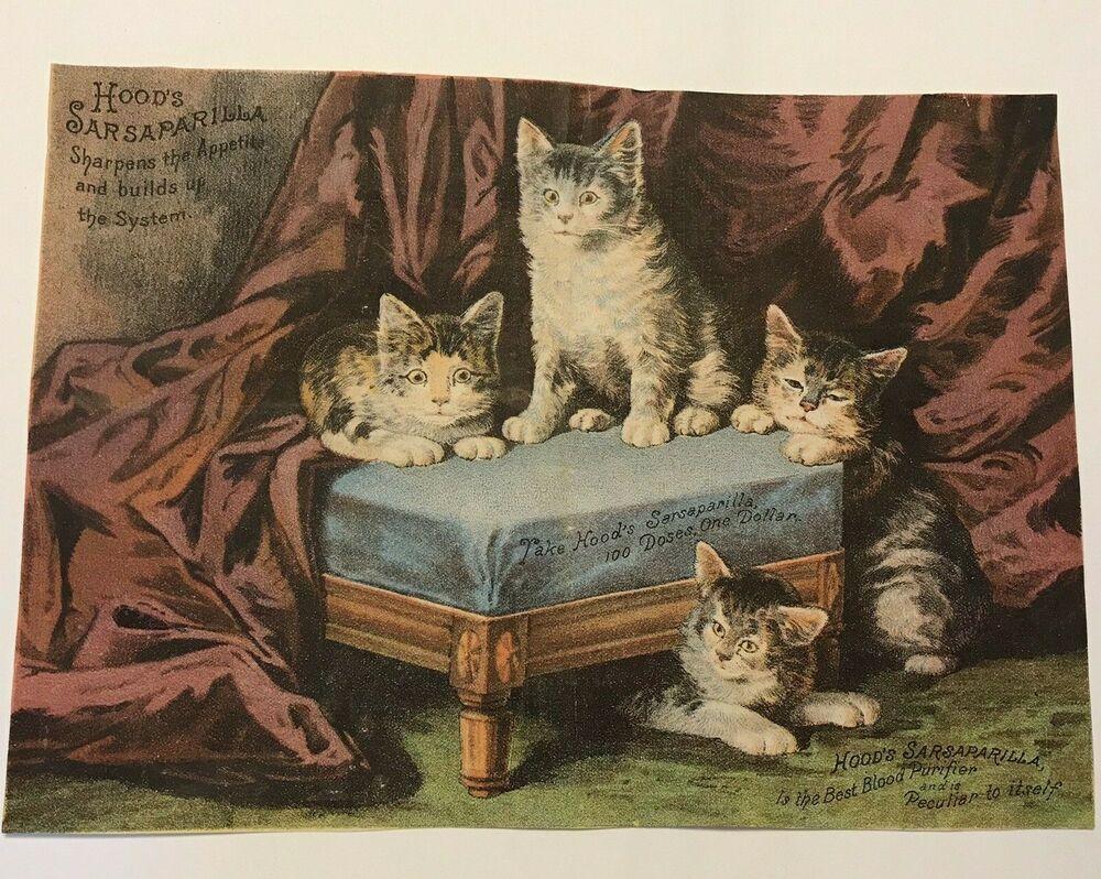 Antique Hood S Sarsaparilla Cat Kittens Advertisement 6 X 9 Cihood Cat Art Cats Vintage Poster Art