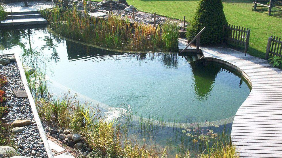 Biotop schwimmteiche gartenteiche naturpools der for Schwimmteich natur