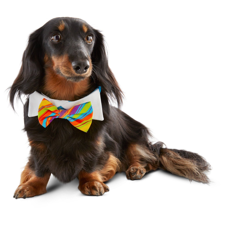 Petco Special Occasions Dog Birthday Bowtie M L Medium Large