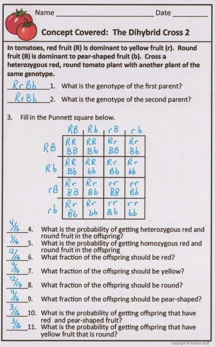 Practice Dihybrid Crosses Worksheet Answers | schematic ...