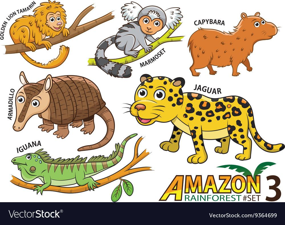 Set Of Cute Cartoon Animals In The Amazon Vector Image On