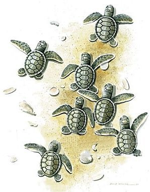 cc7063d0 Baby Sea Turtles T-Shirt | My Style | Turtle tattoo designs, Baby ...