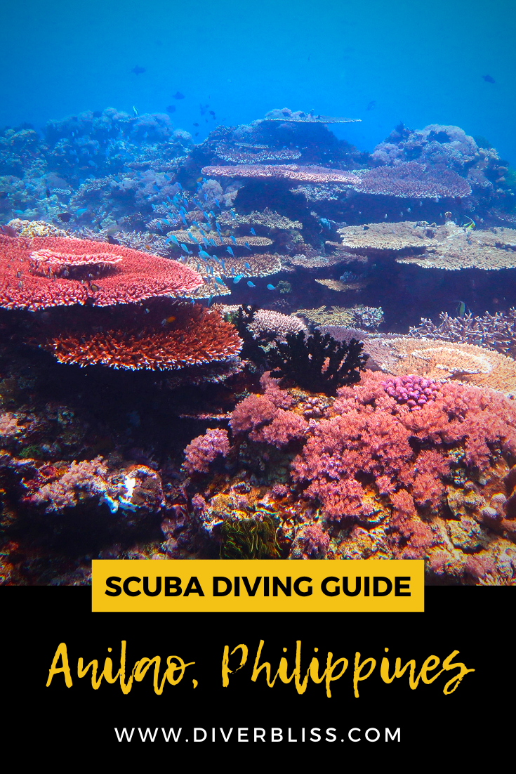 Scuba Diving In Anilao Batangas Philippines In 2020 Philippines Travel Scuba Travel Philippines Travel Guide