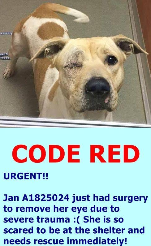 Miami Dade Animal Services Pet Adoption And Protention Center Https Www Facebook Com Urgentdogsofmiami Photos A 1067105343323 Pet Adoption Animals Adoption