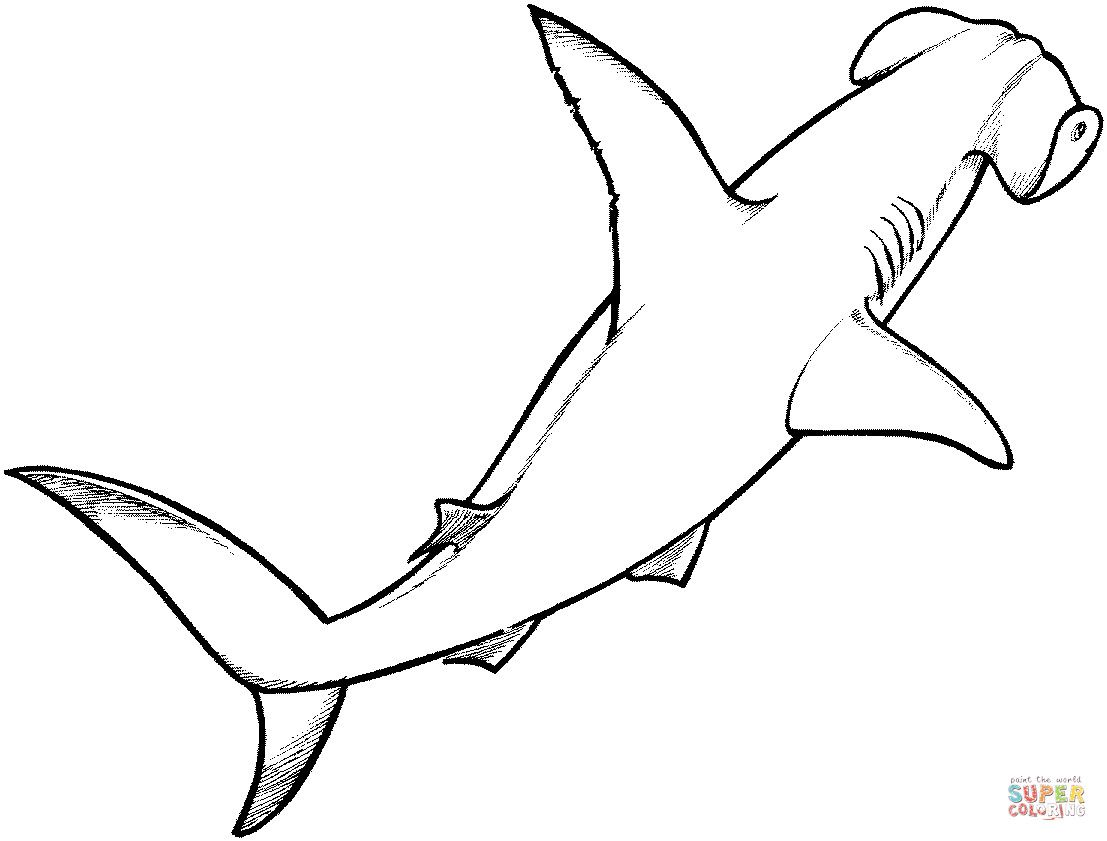 Shark Coloring Pages Hammerhead Shark 1 Coloring Page With Shark Coloring  Pages | Shark coloring pages, Shark drawing, Hammerhead shark