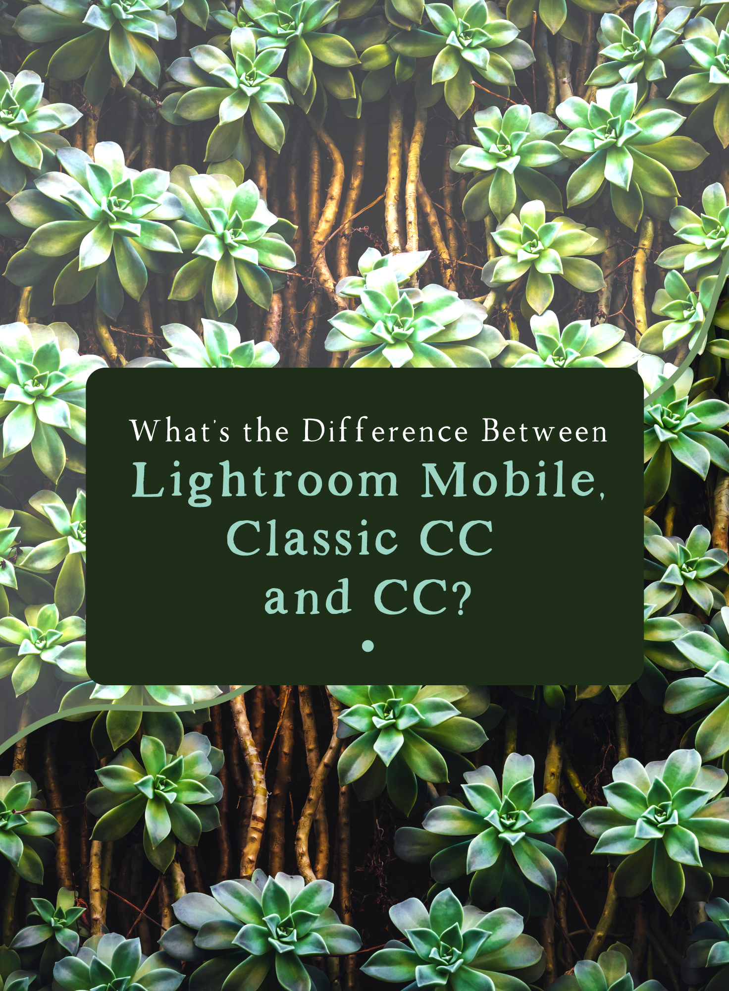 Photoshop vs Elements vs Lightroom   Neocamera
