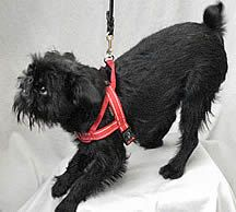 Quick Fit Harness By Ezydog Dog Harness Small Dogs Dogs