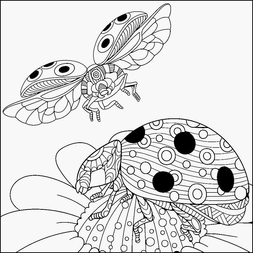 Insectos | Insects | Pinterest | Insectos, Mandalas para colorear y ...