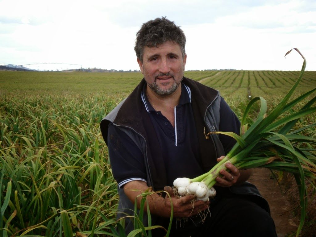 How to Start Garlic Farming Business (With images