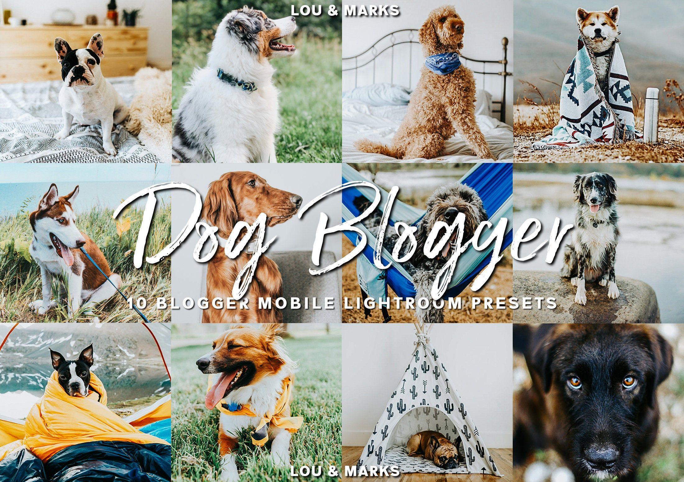 Dog Bloggers Instagram