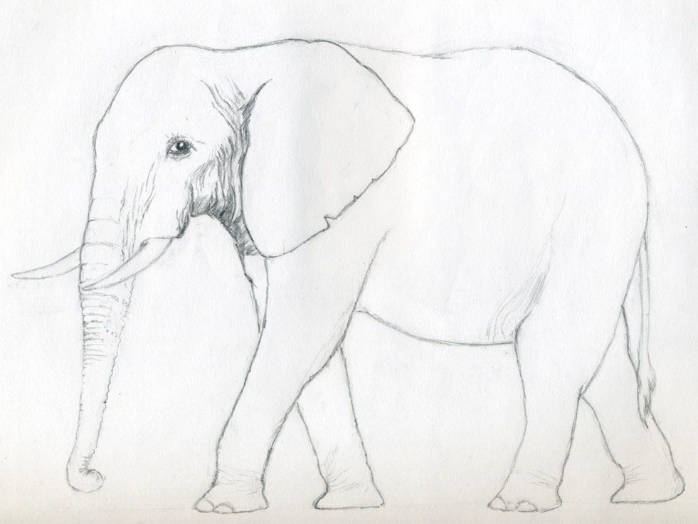 Elephant Pencil Drawing Step By Step