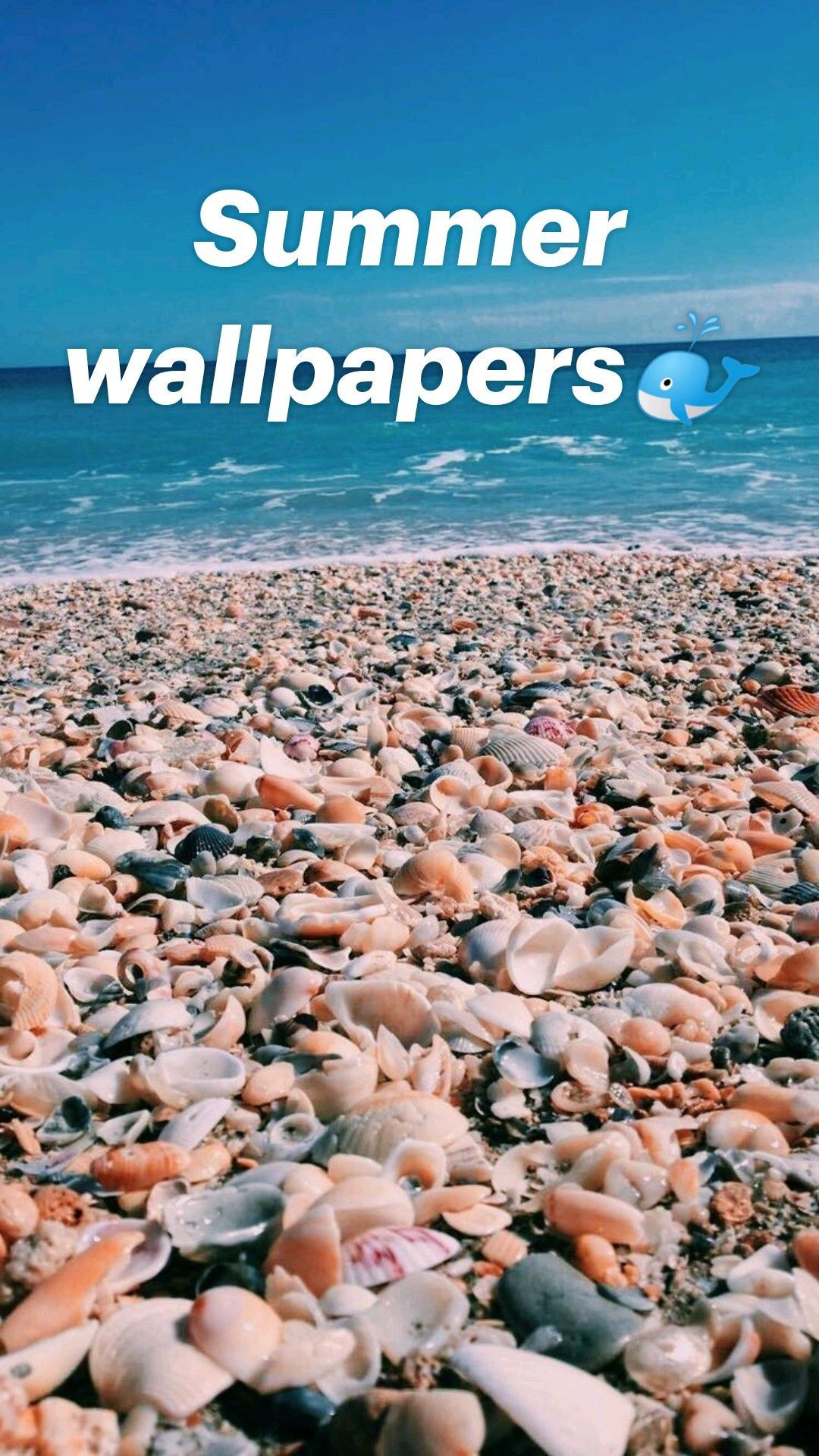 Summer wallpapers🐳 - Betsy Morrow