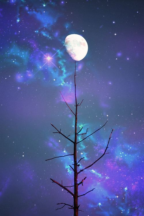 Balancing The Moon Trick Done Every Night By The Last Tree In The Forest Bela Lua Fotos Da Lua Pintura Em Azulejo