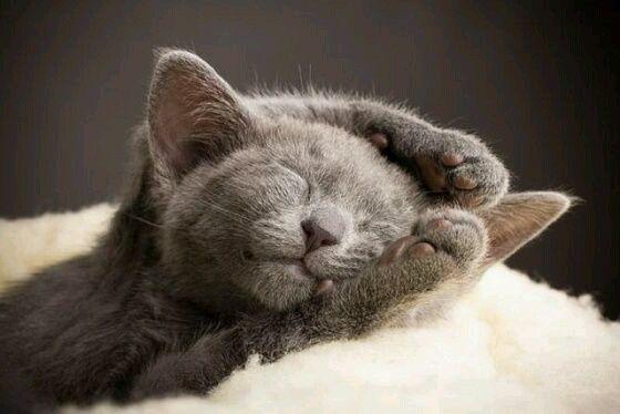 Sleepy kitten, kitty, furry, fluffy, cute, nuttet, cuteness overload, precious, sweet, adorble.