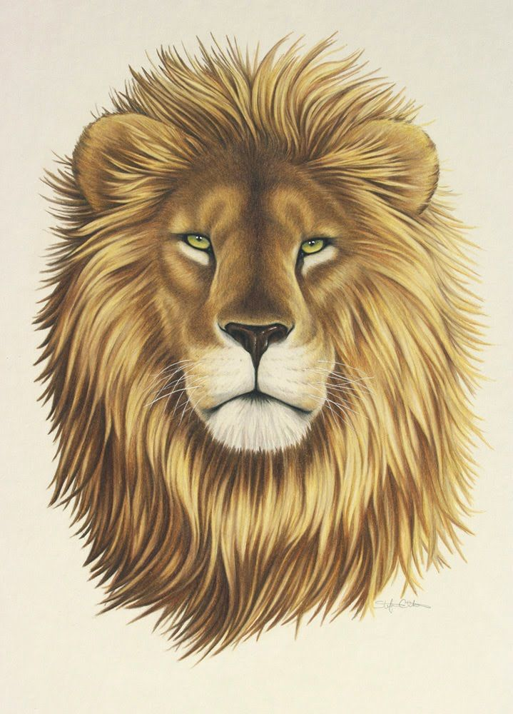 Lion Drawing Color : drawing, color, Gallery, Fierce, Drawing, Watercolor, Lion,, Drawing,, Painting