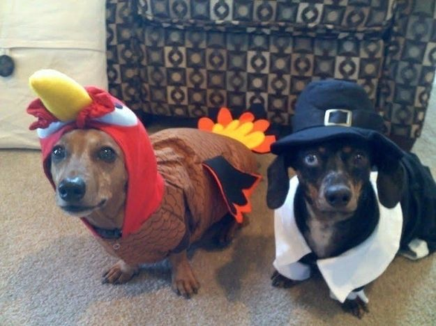 Image result for cats dog in turkey costume