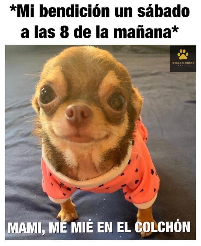 Pin By Careliz Martinez On Doggies Funny Memes Anime Memes Animals