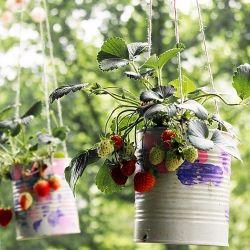 Diy Strawberry Planters So Im A Sucker For Re Using Old Mason