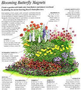 Butterfly garden plants garden yards flowers for Cottage garden design zone 5