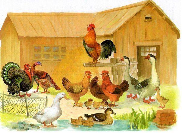 ПТИЧИЙ ДВОР / Дети - это счастье! | Домашние птицы, Птицы, Детские ...