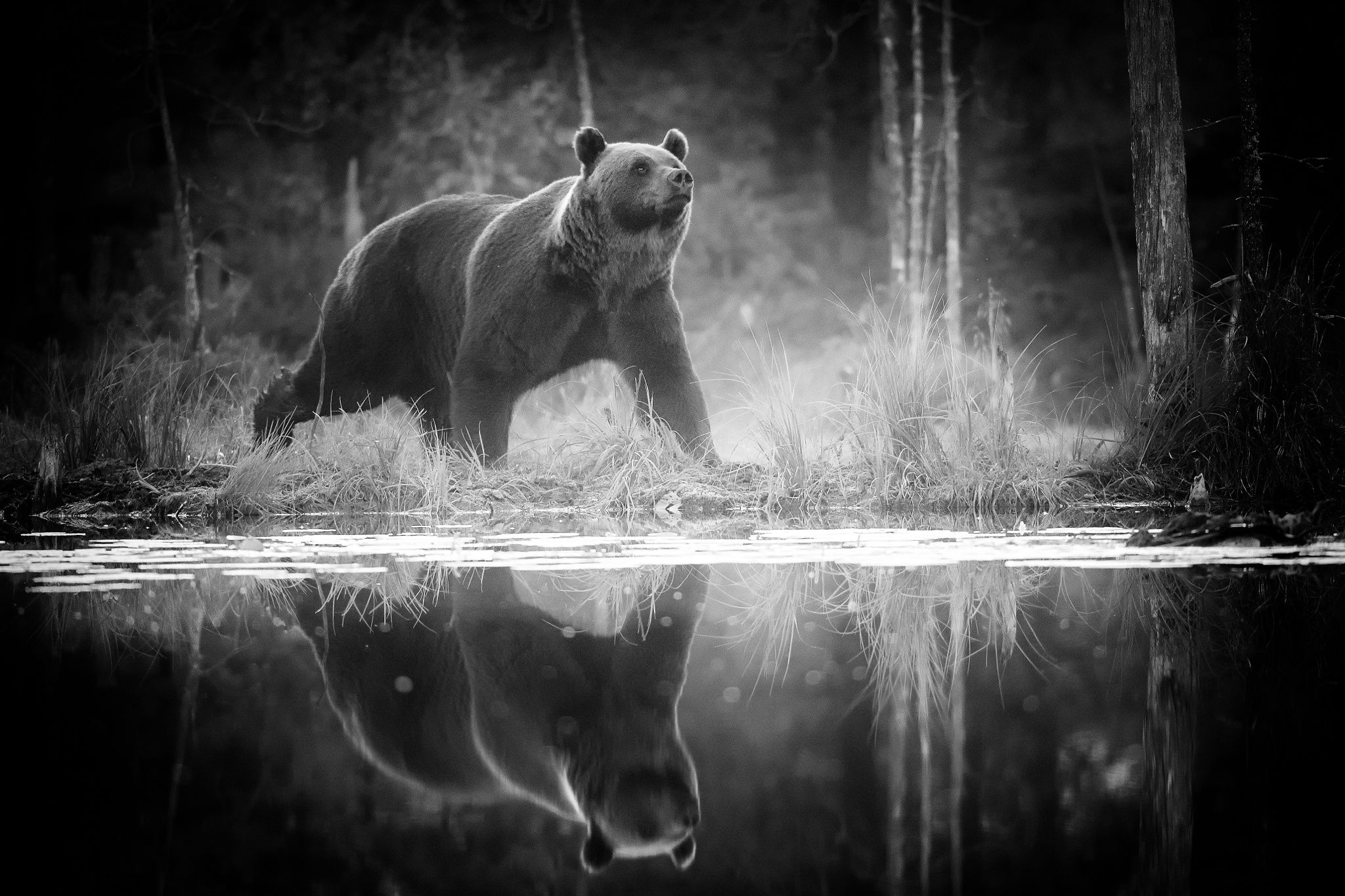 Photograph Bear with reflection by Alexandr Sanin on 500px