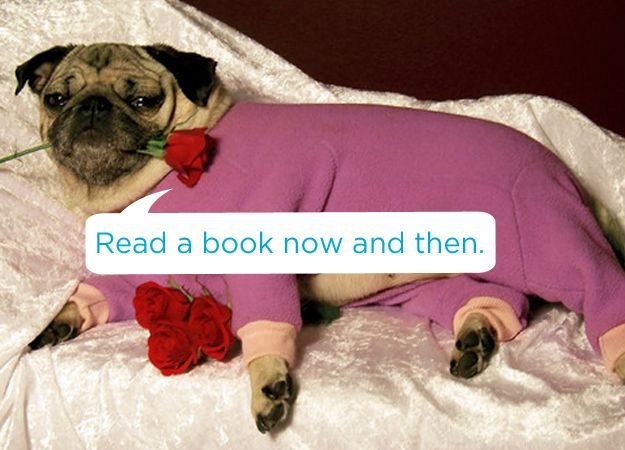 Read a book now and then! / 19 Tips To Get Through Adulthood According To Adorable Animals (via BuzzFeed)