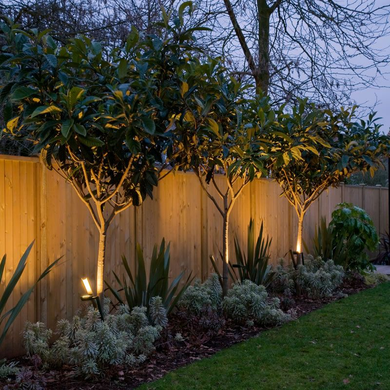 uplit trees adding interest along the fence in the furthest garden segment