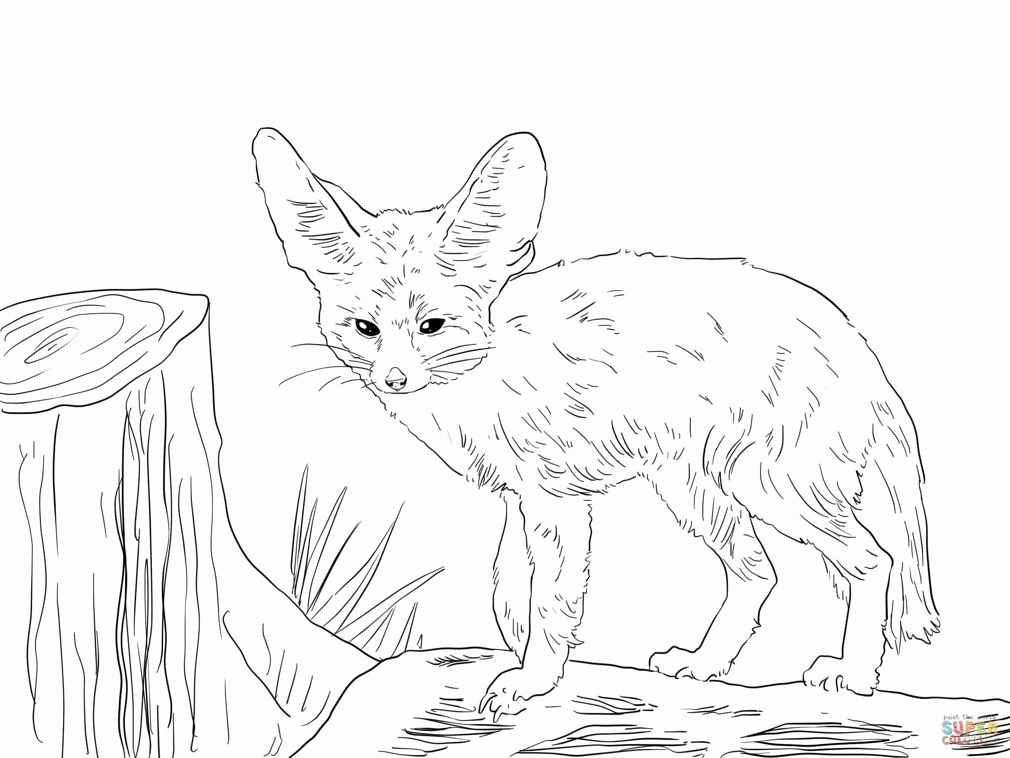 Fennec Fox Coloring Page Beautiful north African Fennec