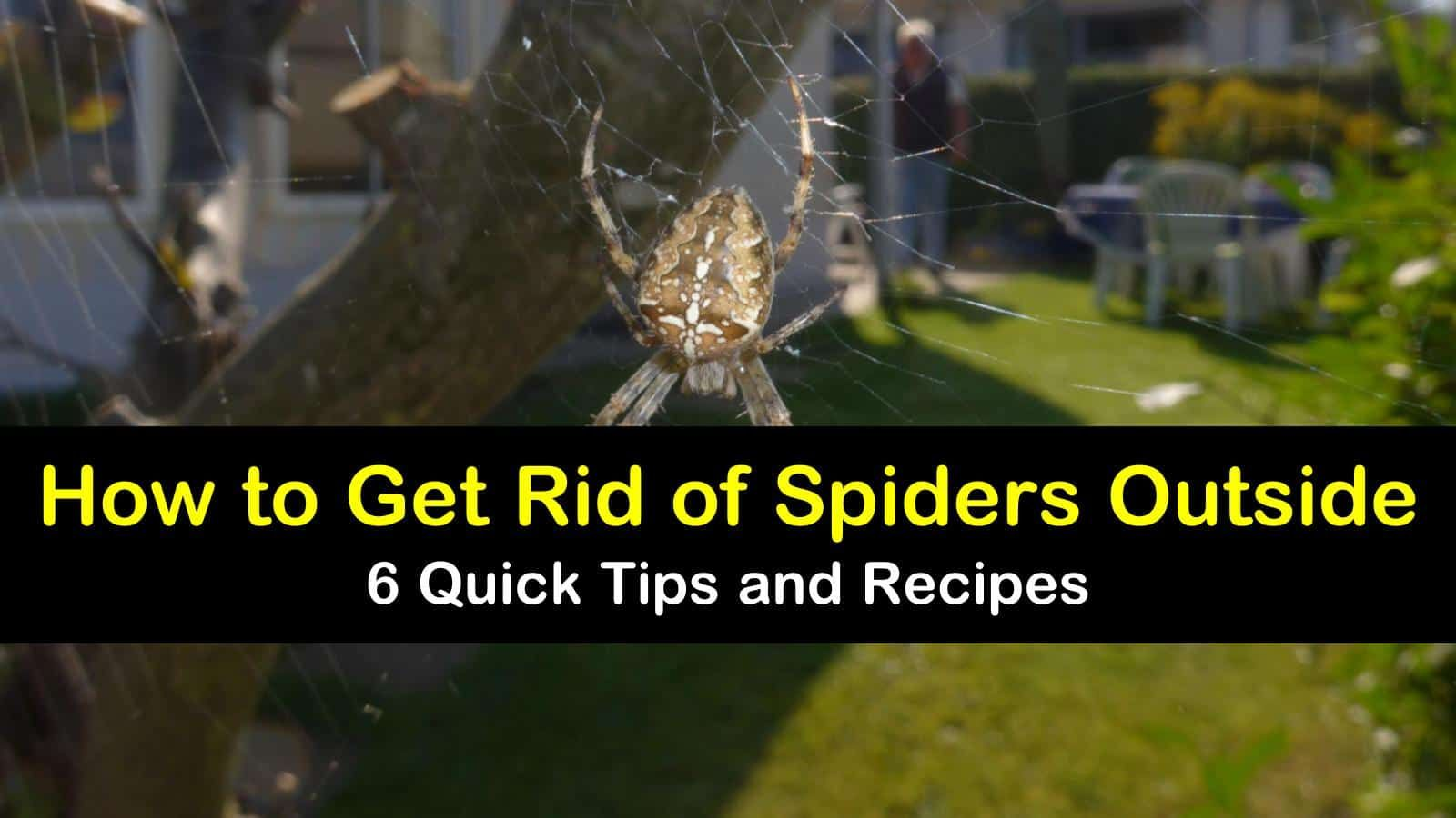 how to get rid of wolf spiders outside