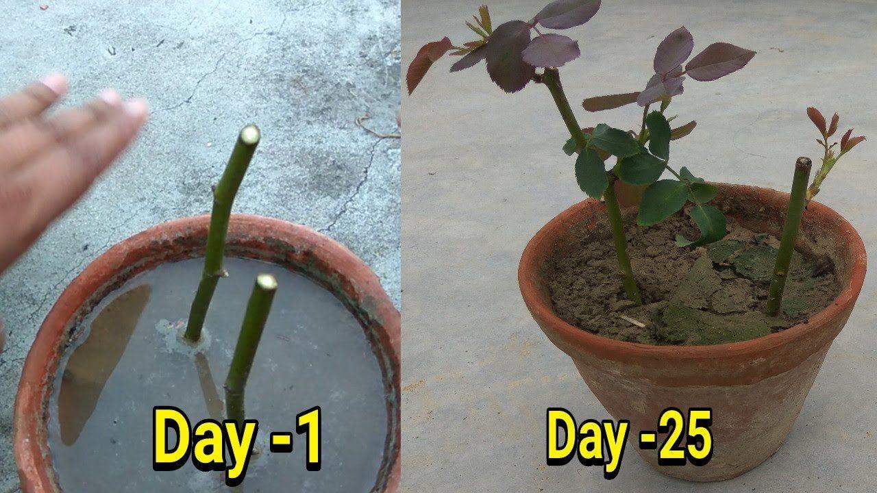 Pin On Gardening Flowers Herbs Plants
