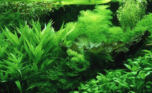 How To Use Newspaper To Prevent Weeds Planted Aquarium Freshwater Aquarium Plants Live Aquarium Plants