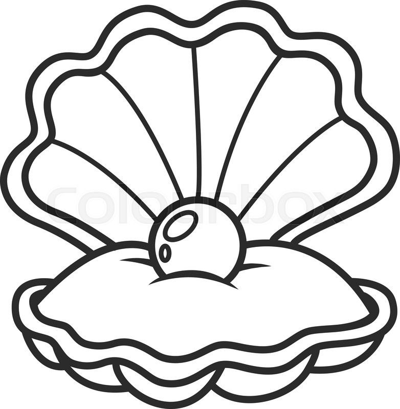 Image Result For Sea Shell Pearl Drawing