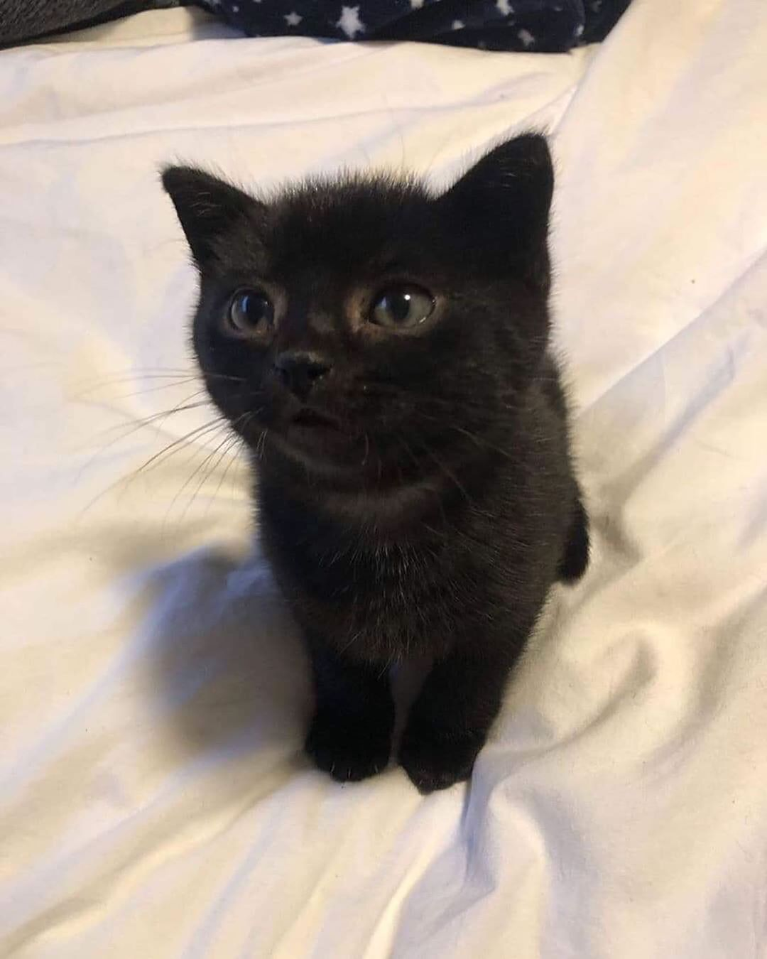 My Sister Found A Kitten Name Suggestions We Dont Know The Gender Yet Cats Cute Black Kitten Kittens And Puppies