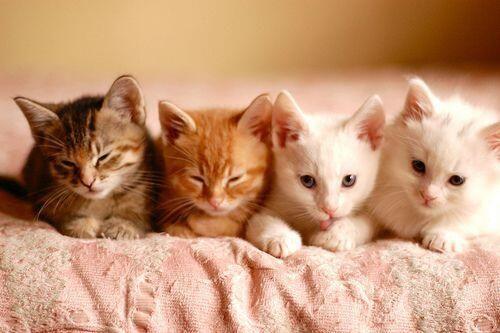 Emergency Kittens On Kittens Cutest Cute Kitten Gif Cute Cats