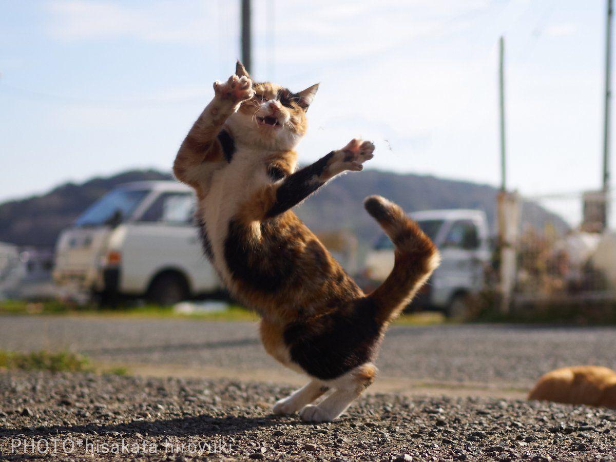 久方 広之「のら猫拳」 on(画像あり) 猫 写真