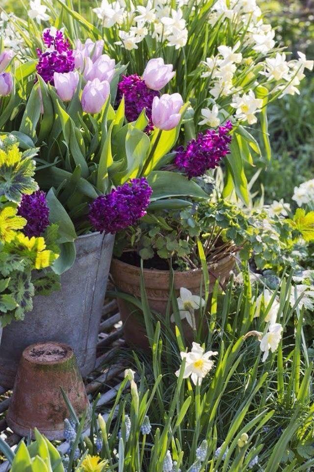 spring has sprung garten pinterest fr hling stillleben und fr hjahr. Black Bedroom Furniture Sets. Home Design Ideas