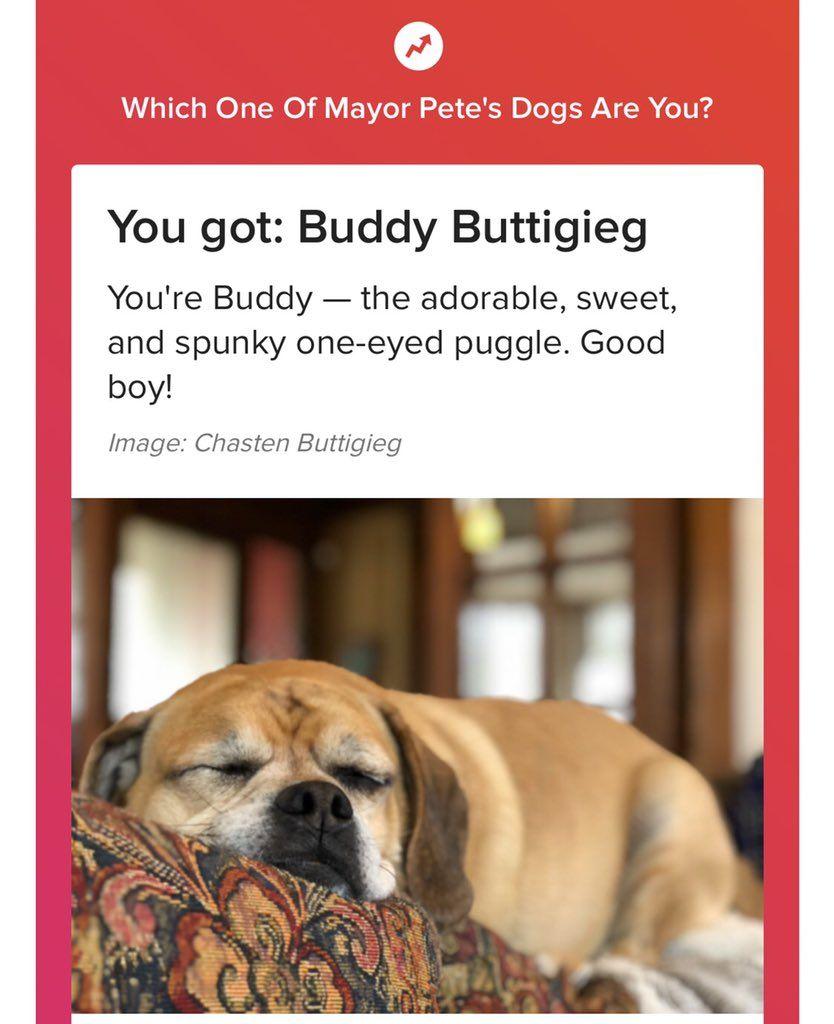 Chasten Buttigieg On Twitter Puggle Dog Life Dogs