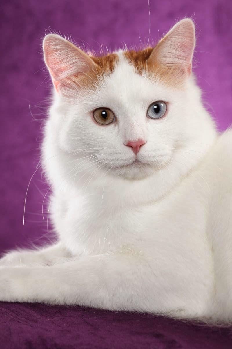 Terpecah Memecahkan Kebuntuan Informasi Anda Jenis Kucing Di