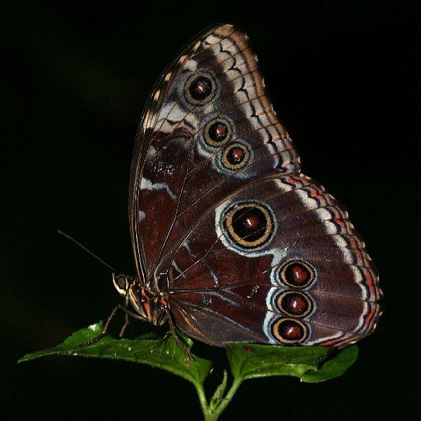 나비우리카지노