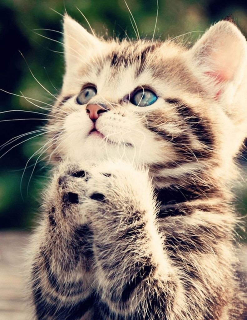 Que lindo coisas que adoro pinterest amen cat and animal
