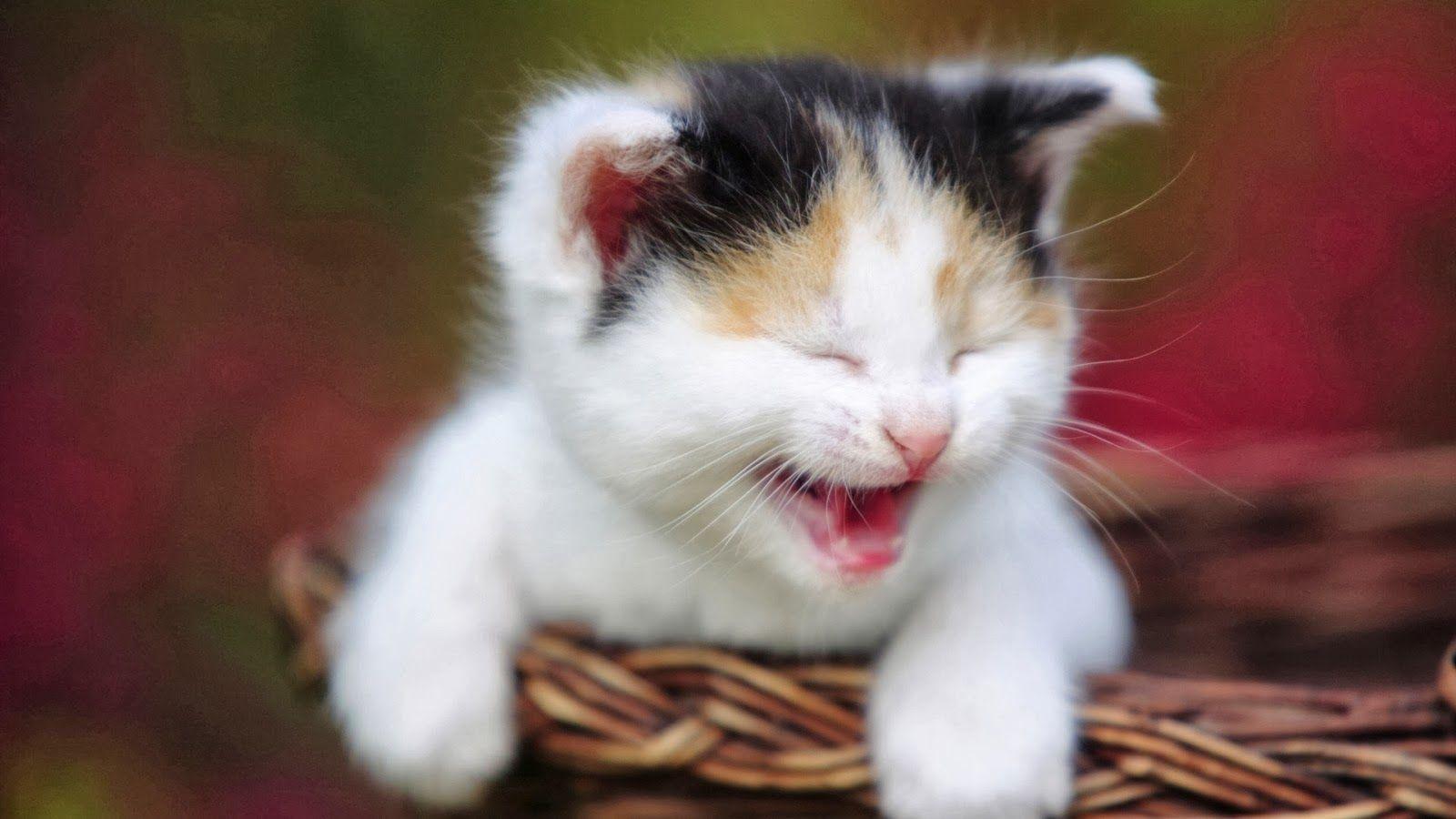 Anak Kucing Kucing Lucu Kucing Imut Kucing pintar Kucing