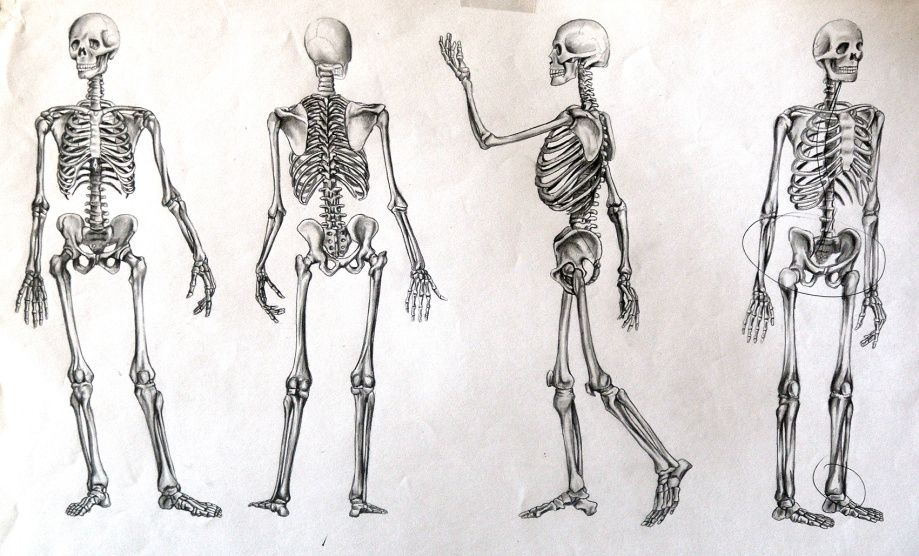 Esqueleto del pie  Para a  Pinterest  Pajer
