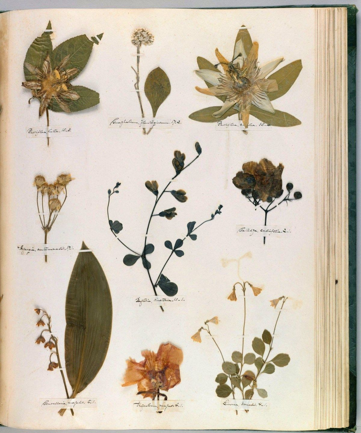 названия растений с фотографиями для гербария надгробных памятников мемориальных