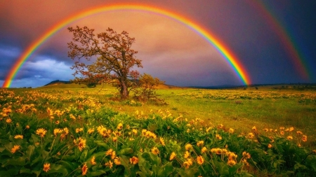Rainbow In Springtime Rainbows Nature Background Wallpapers On Desktop Nexus Image 237143 Rainbow Wallpaper Backgrounds Spring Landscape Rainbow Wallpaper