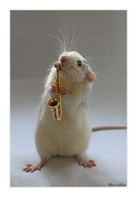 Картинки прикольные крысы, любимой
