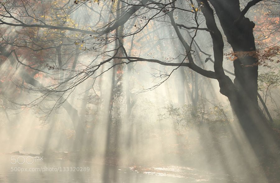 Light showers - Pinned by Mak Khalaf Thank you for your visit Landscapes 가을나무단풍빛샤워아침 by kimmd35141