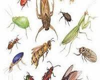 شركة ال صالح افضل شركة مكافحة الحشرات بالدمام Http Www Alsaleh Group Com 3 Furniture Transfer Dammam Company Dammam Animals Plants