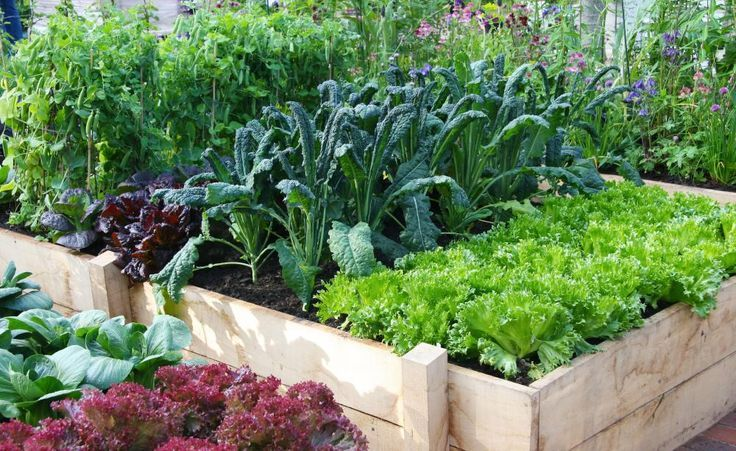 Photo of 10 tips for the raised bed