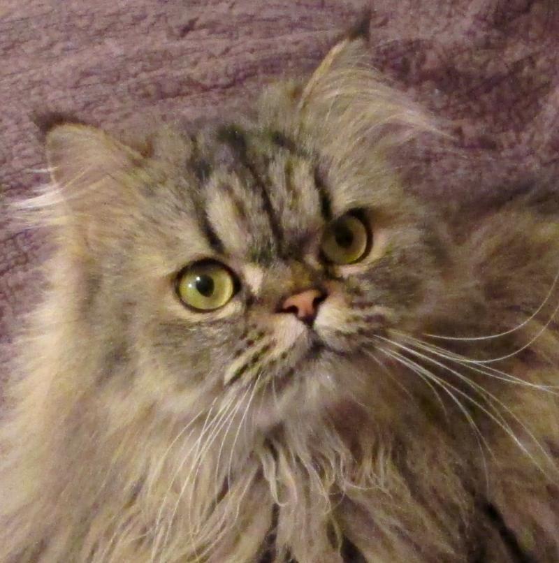 Adopt Titus On Kitten Adoption Cat Adoption Cats
